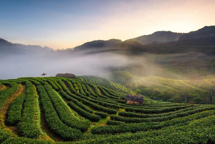 Chiang Mai - donde viajar en invierno