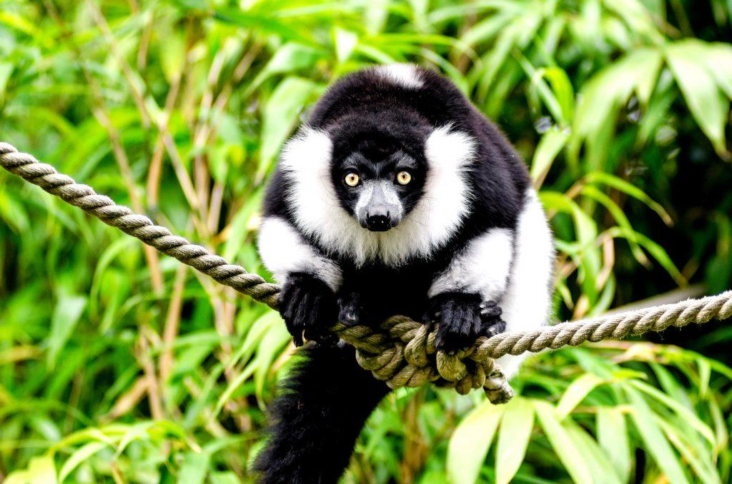 Selva de Madagascar