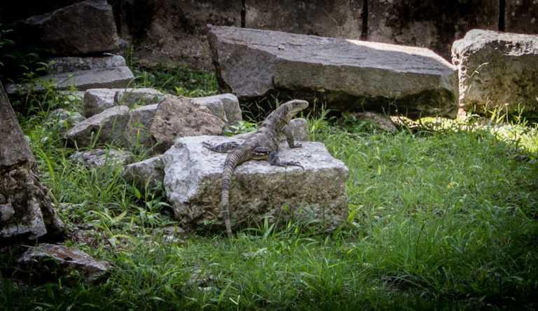 Ruinas de Chichen Itza