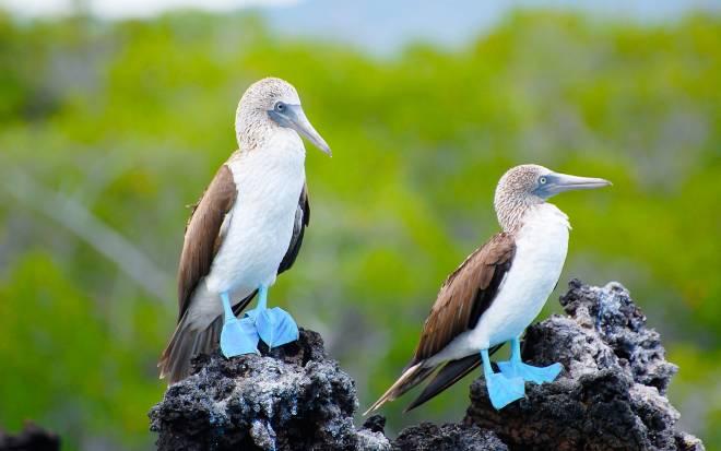 fauna islas galapagos