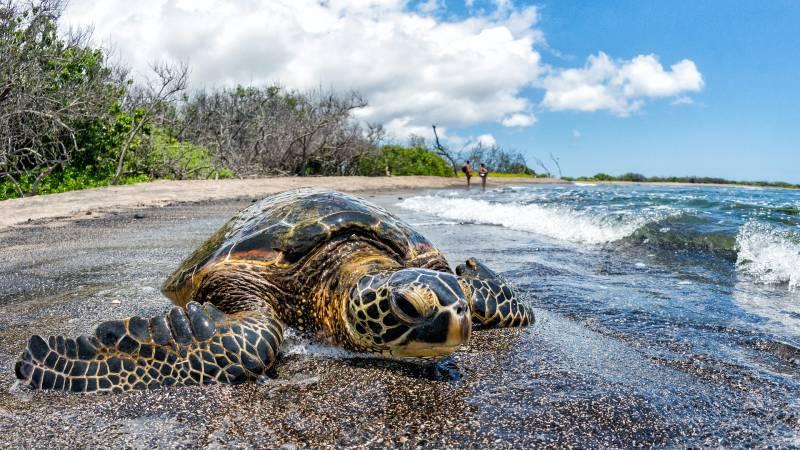 isla grande - islas de hawai