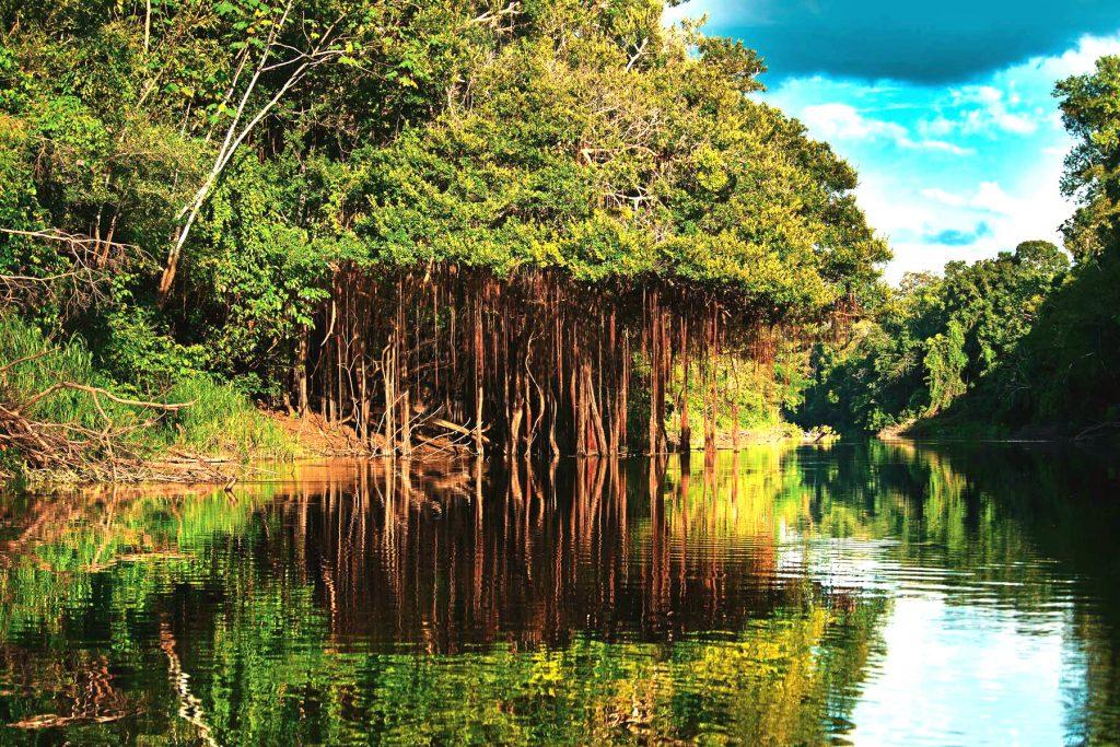 Amazonas - Brasil